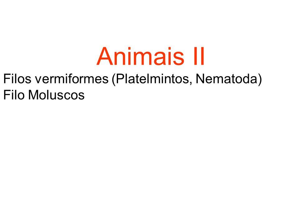 Animais II Filos vermiformes (Platelmintos, Nematoda) Filo Moluscos