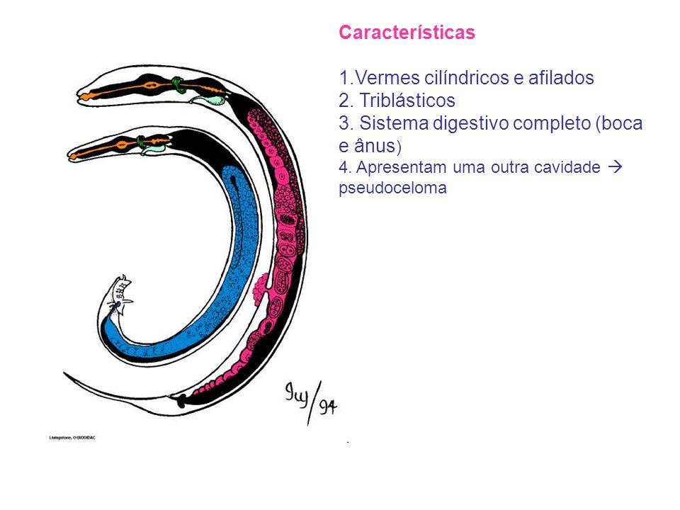 1.Vermes cilíndricos e afilados 2. Triblásticos