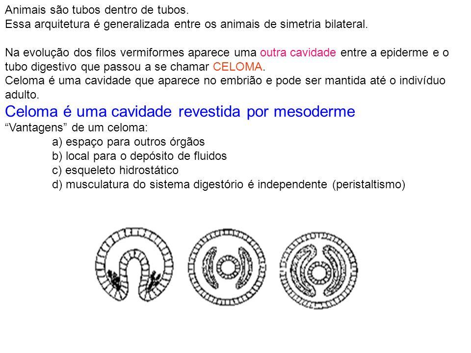 Celoma é uma cavidade revestida por mesoderme