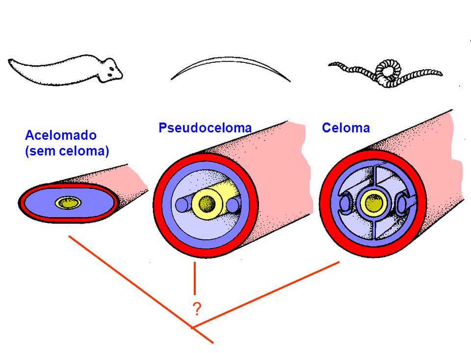 Pseudoceloma Celoma Acelomado (sem celoma)