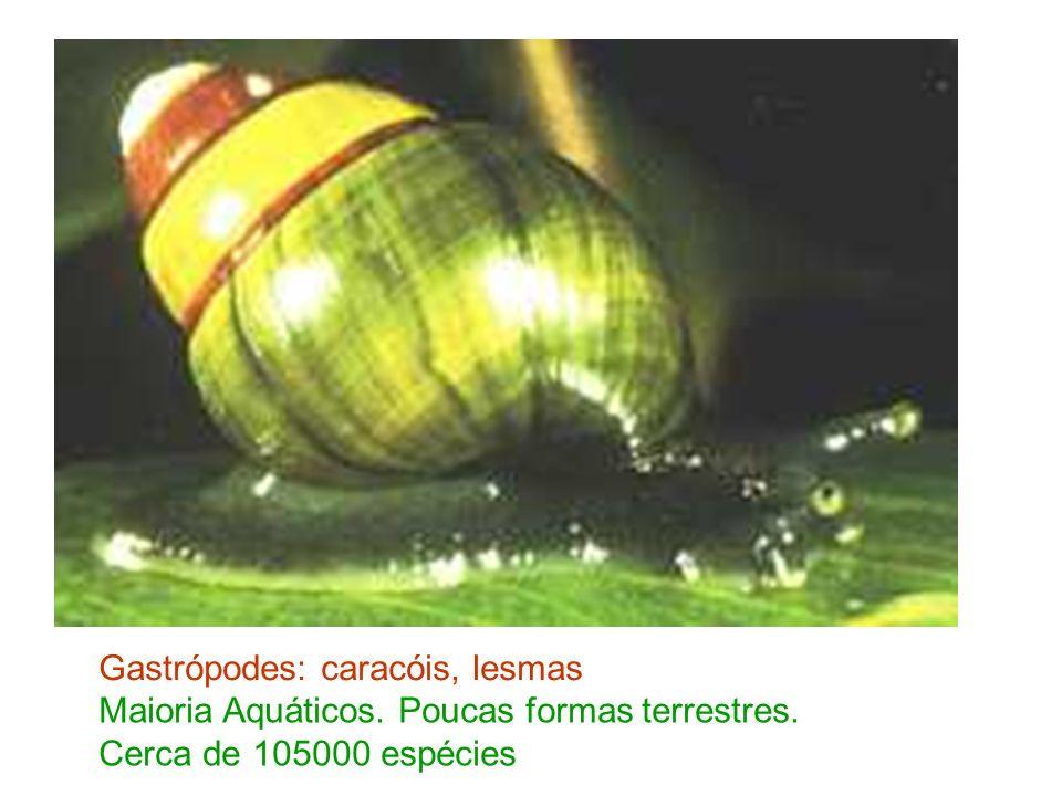 Gastrópodes: caracóis, lesmas