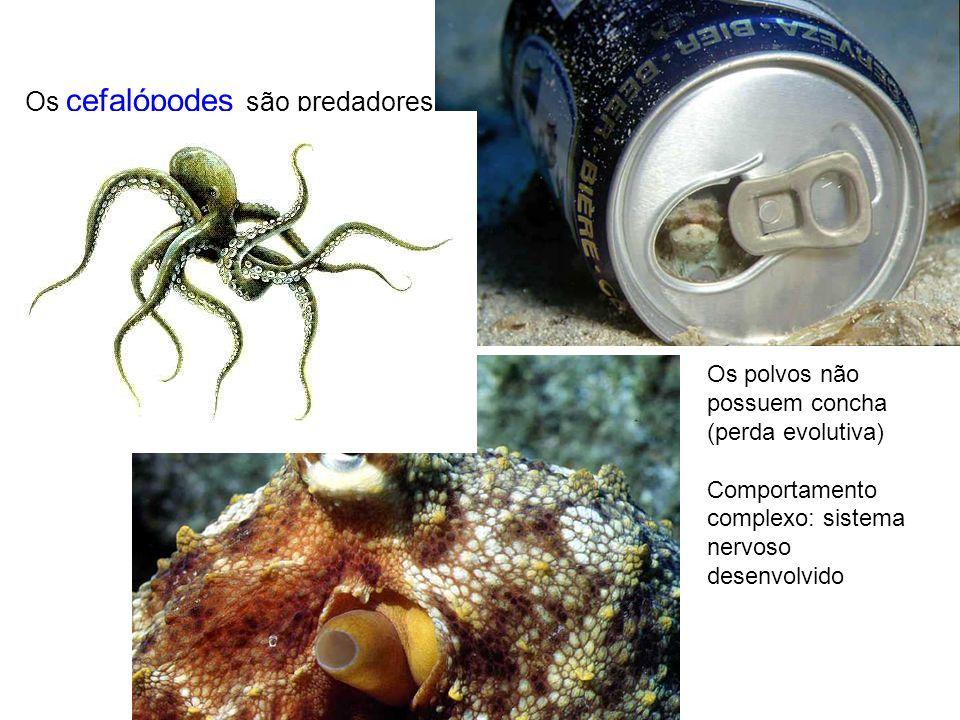 Os cefalópodes são predadores