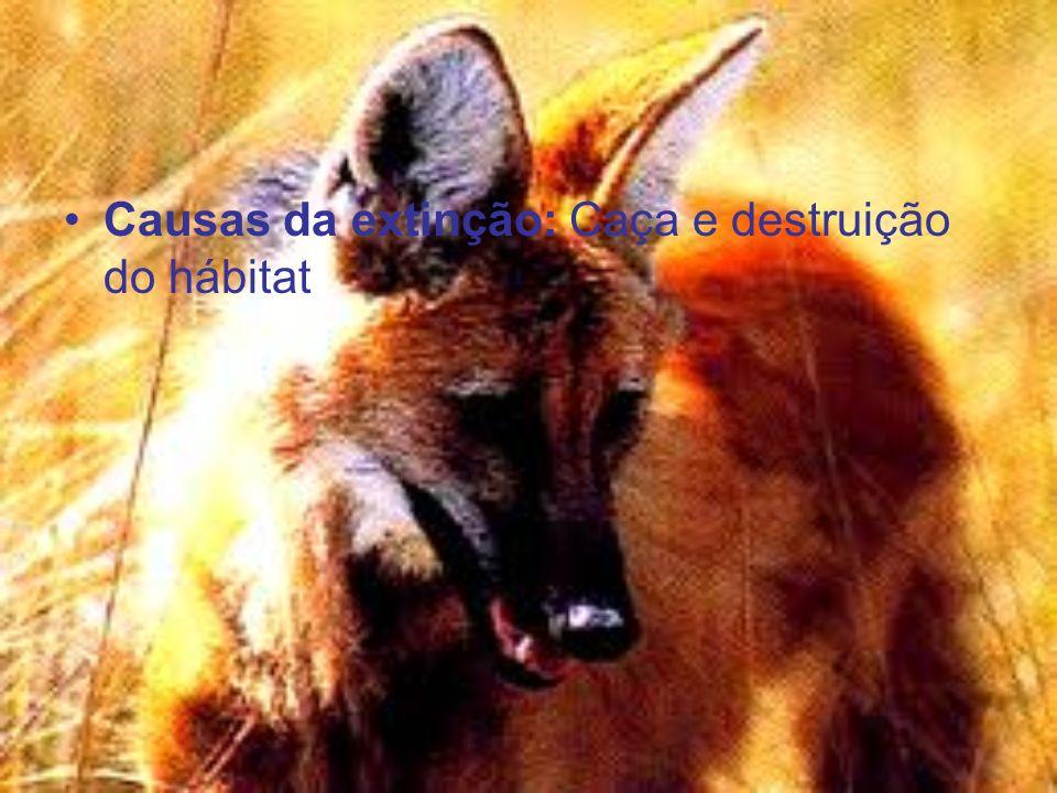 Causas da extinção: Caça e destruição do hábitat