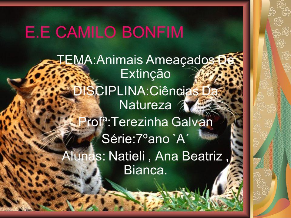 E.E CAMILO BONFIM TEMA:Animais Ameaçados De Extinção