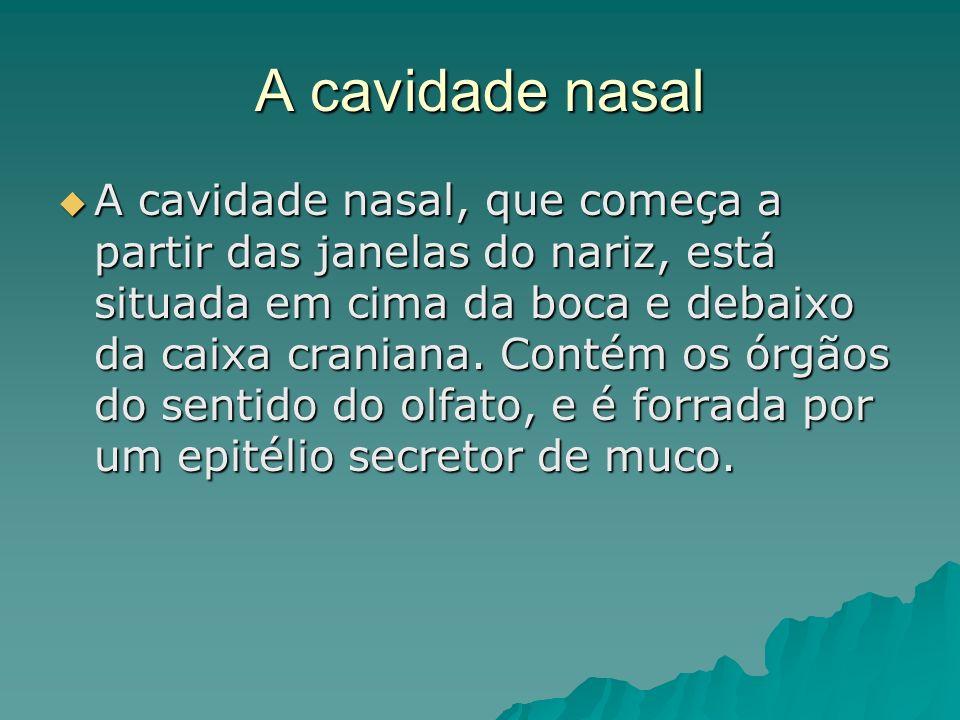 A cavidade nasal