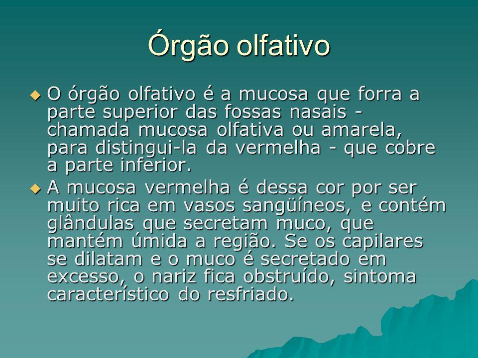 Órgão olfativo