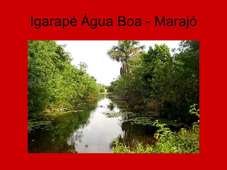 Igarapé Água Boa - Marajó