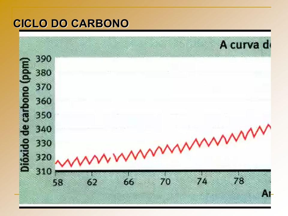 CICLO DO CARBONO