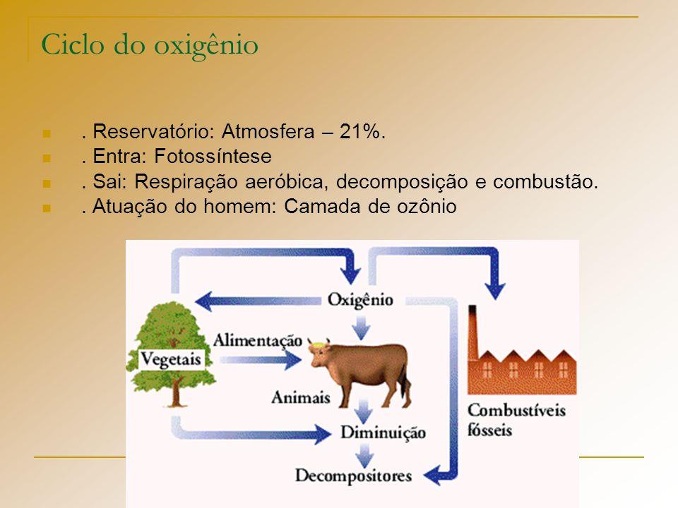 Ciclo do oxigênio . Reservatório: Atmosfera – 21%.