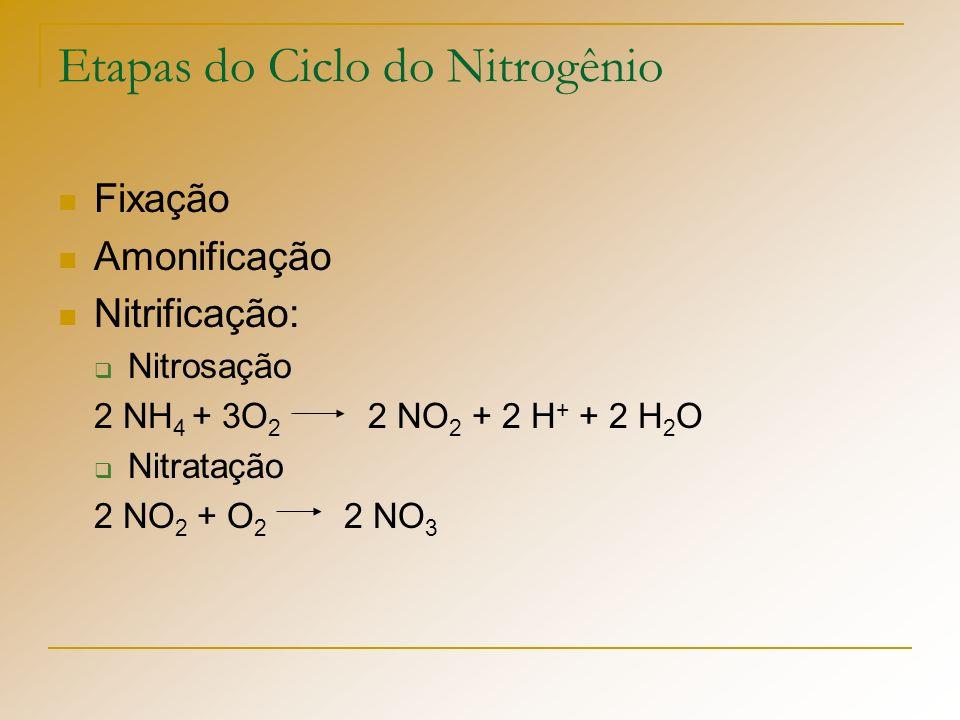 Etapas do Ciclo do Nitrogênio
