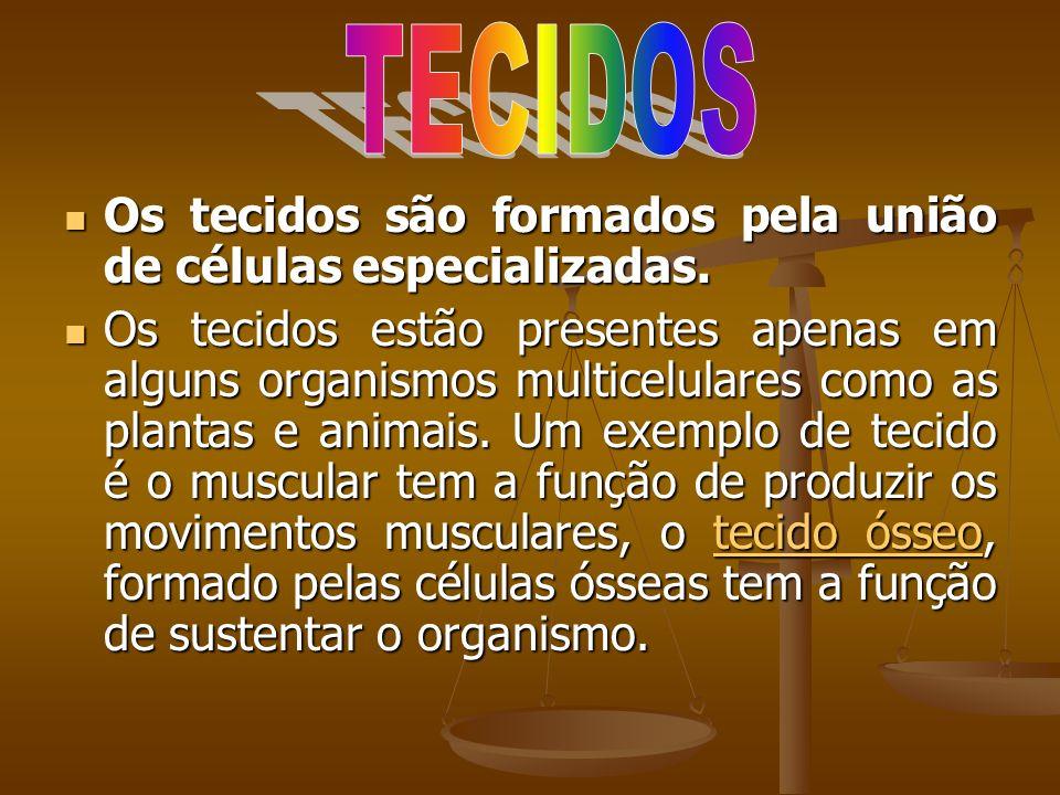 TECIDOS Os tecidos são formados pela união de células especializadas.
