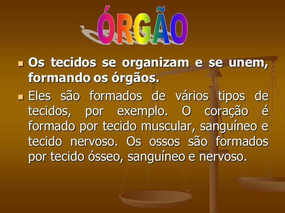 ÓRGÃO Os tecidos se organizam e se unem, formando os órgãos.