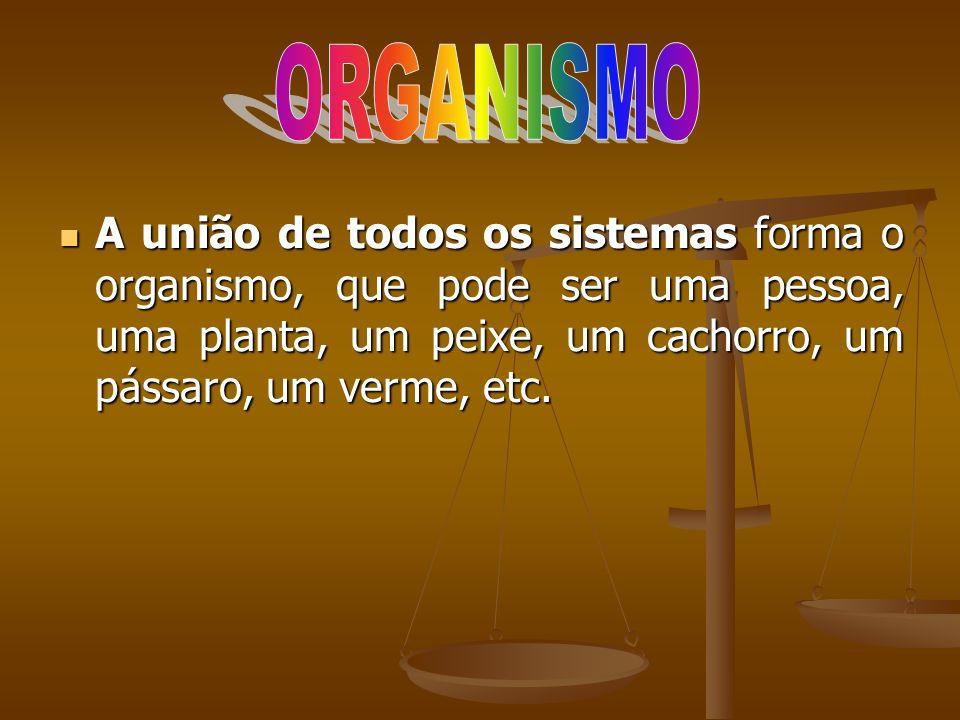 ORGANISMO A união de todos os sistemas forma o organismo, que pode ser uma pessoa, uma planta, um peixe, um cachorro, um pássaro, um verme, etc.