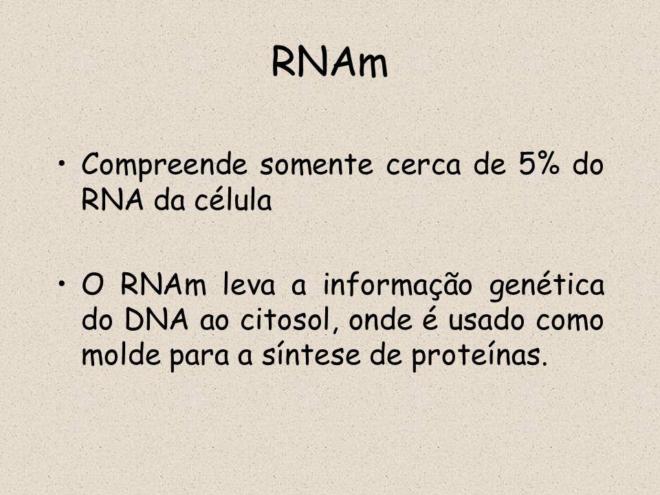 RNAm Compreende somente cerca de 5% do RNA da célula