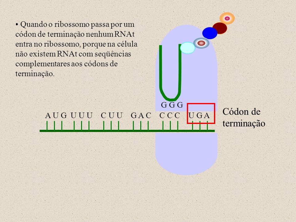 Quando o ribossomo passa por um códon de terminação nenhum RNAt entra no ribossomo, porque na célula não existem RNAt com seqüências complementares aos códons de terminação.