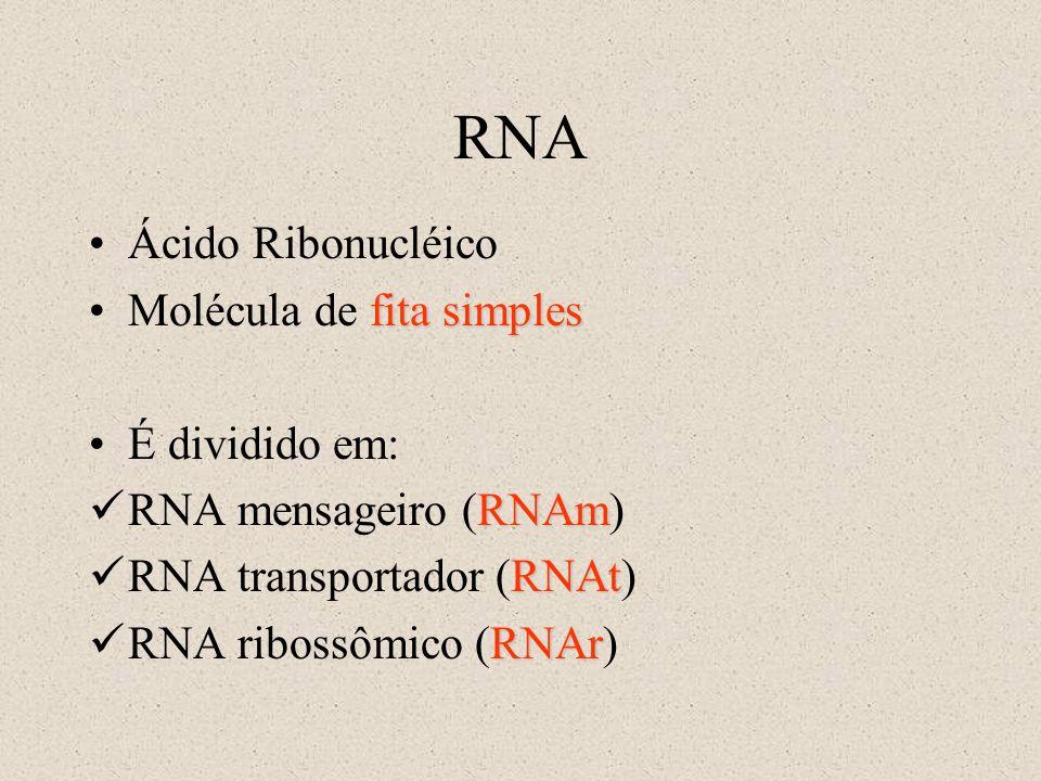 RNA Ácido Ribonucléico Molécula de fita simples É dividido em:
