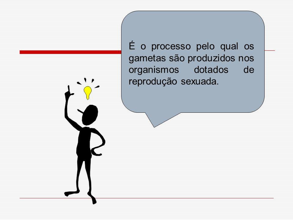 É o processo pelo qual os gametas são produzidos nos organismos dotados de reprodução sexuada.