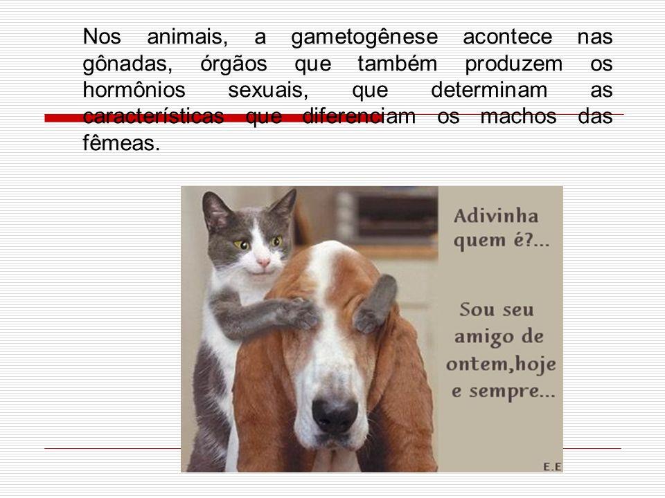 Nos animais, a gametogênese acontece nas gônadas, órgãos que também produzem os hormônios sexuais, que determinam as características que diferenciam os machos das fêmeas.