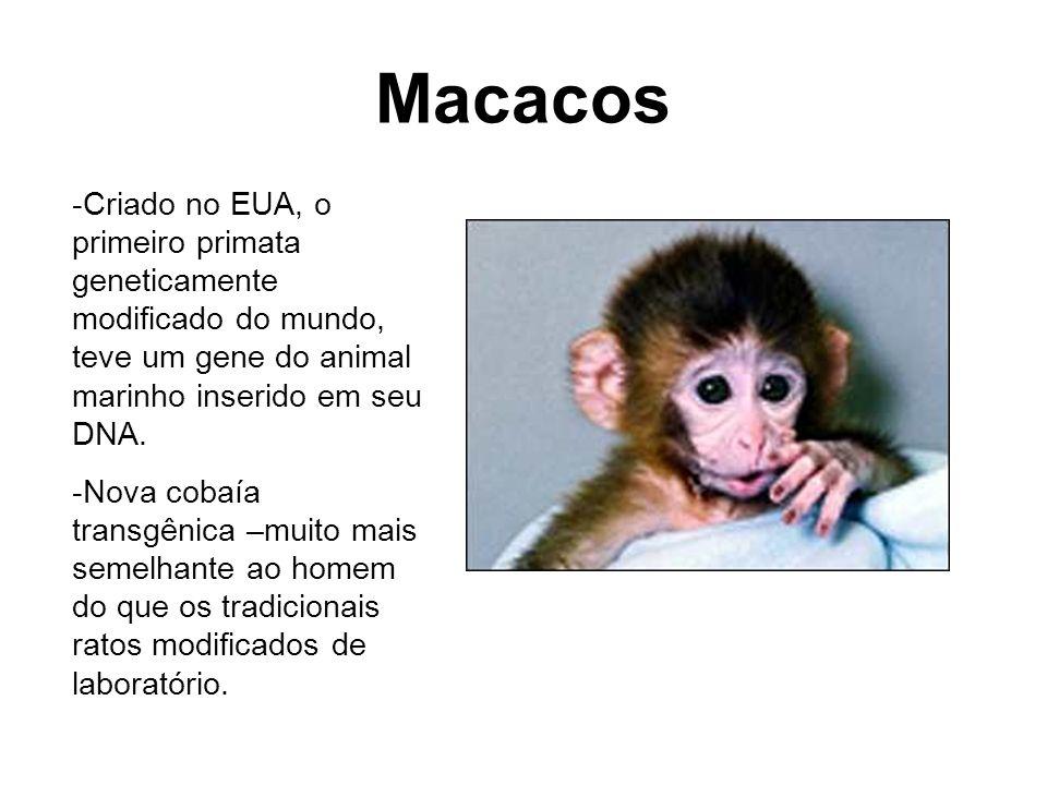 Macacos -Criado no EUA, o primeiro primata geneticamente modificado do mundo, teve um gene do animal marinho inserido em seu DNA.