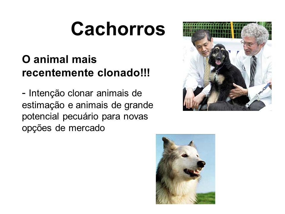 Cachorros O animal mais recentemente clonado!!!