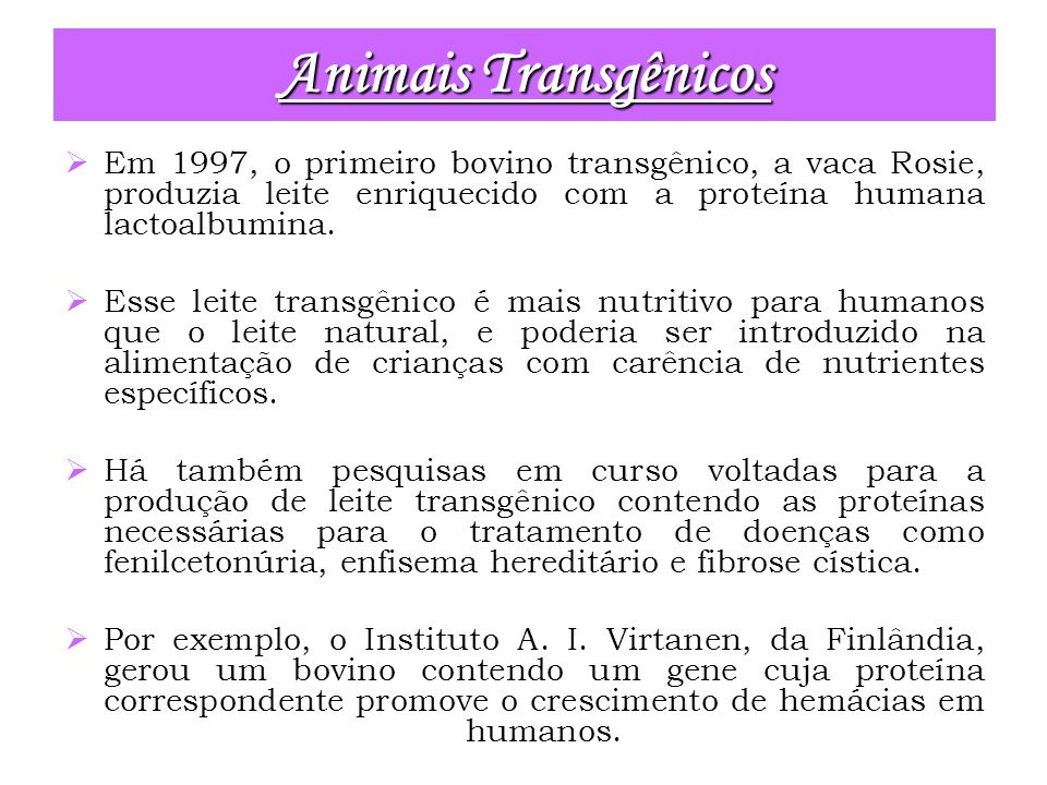 Animais Transgênicos Em 1997, o primeiro bovino transgênico, a vaca Rosie, produzia leite enriquecido com a proteína humana lactoalbumina.