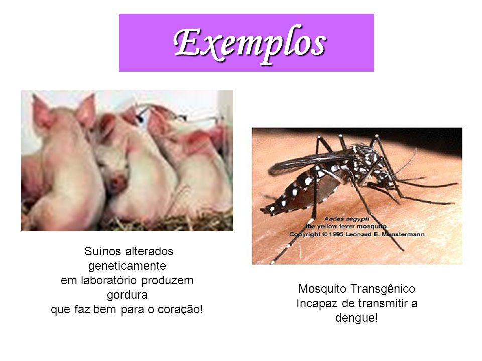 Mosquito Transgênico Incapaz de transmitir a dengue!