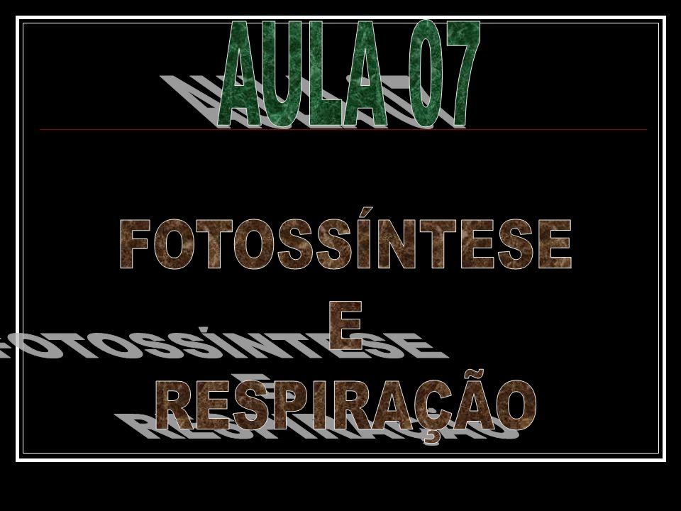 AULA 07 FOTOSSÍNTESE E RESPIRAÇÃO