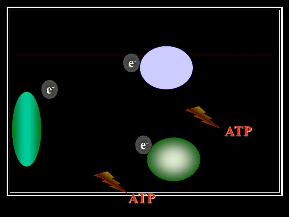 Dessa proteína, o elétron é passado para outras proteínas transportadoras presentes na membrana dos tilacóides.