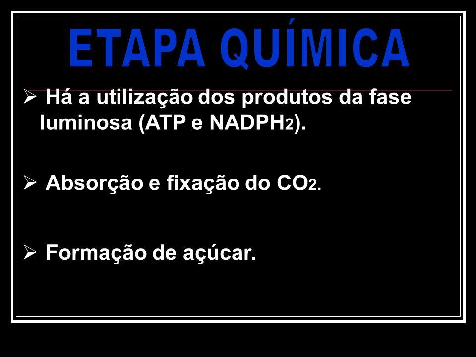 ETAPA QUÍMICA Há a utilização dos produtos da fase luminosa (ATP e NADPH2). Absorção e fixação do CO2.