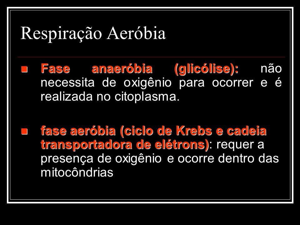 Respiração Aeróbia Fase anaeróbia (glicólise): não necessita de oxigênio para ocorrer e é realizada no citoplasma.