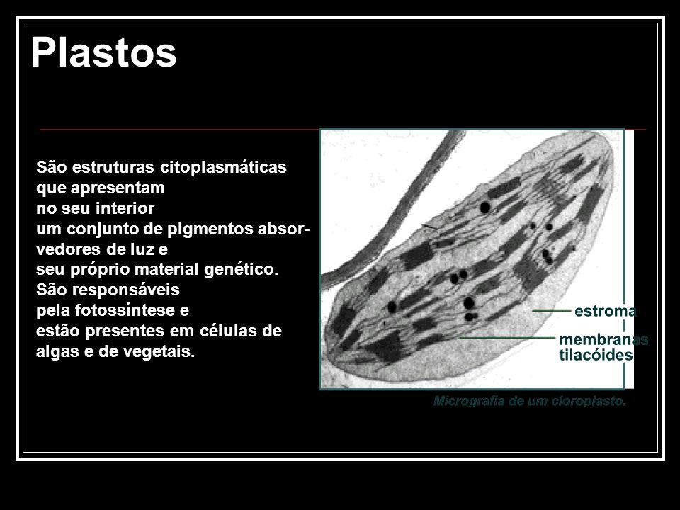 Plastos São estruturas citoplasmáticas que apresentam no seu interior