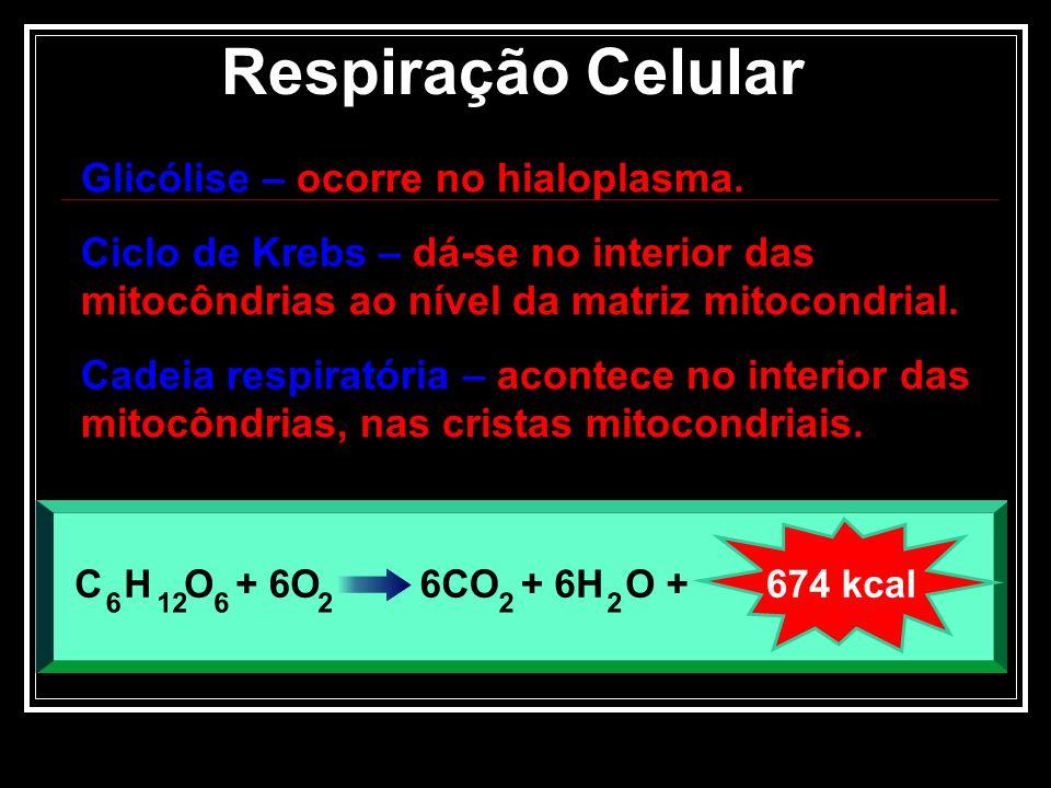 Respiração Celular Glicólise – ocorre no hialoplasma.