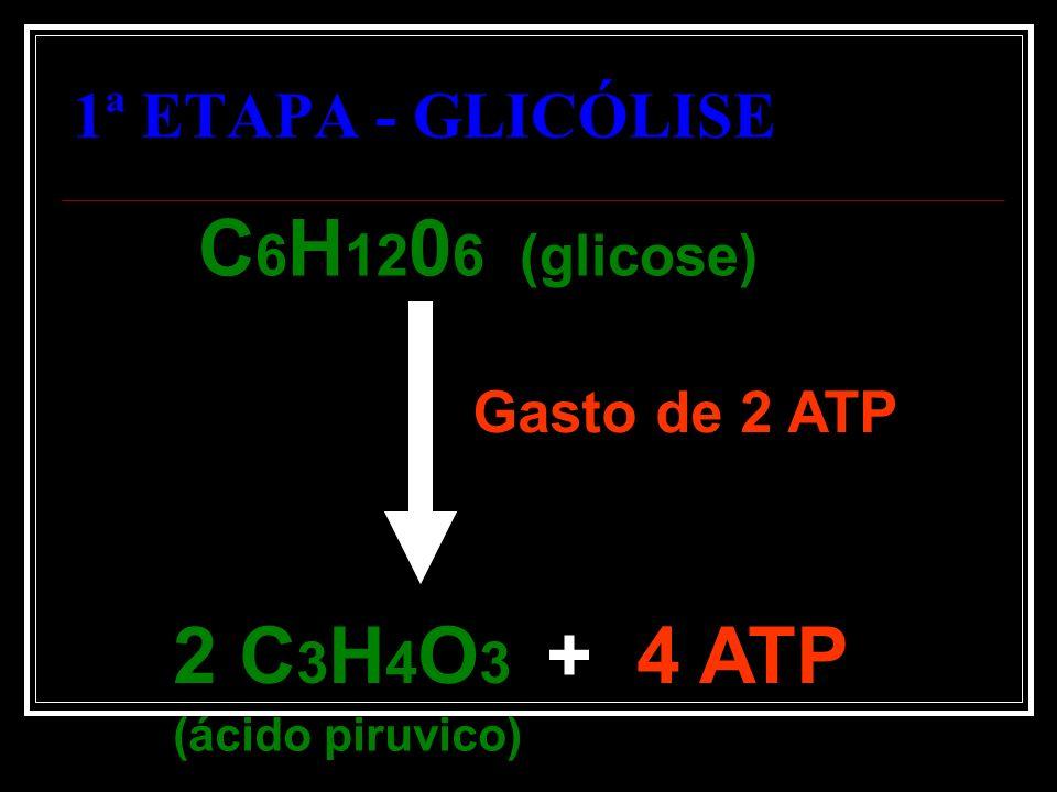 C6H1206 (glicose) 2 C3H4O3 + 4 ATP 1ª ETAPA - GLICÓLISE Gasto de 2 ATP
