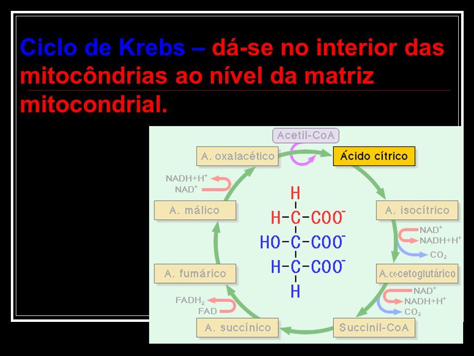 Ciclo de Krebs – dá-se no interior das mitocôndrias ao nível da matriz mitocondrial.
