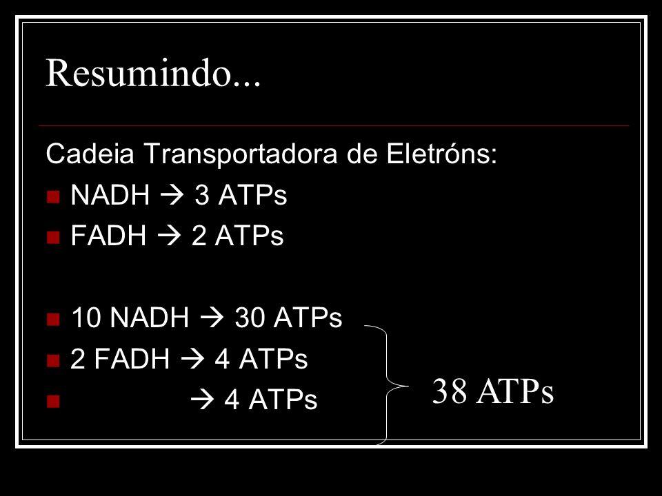 Resumindo... 38 ATPs Cadeia Transportadora de Eletróns: NADH  3 ATPs