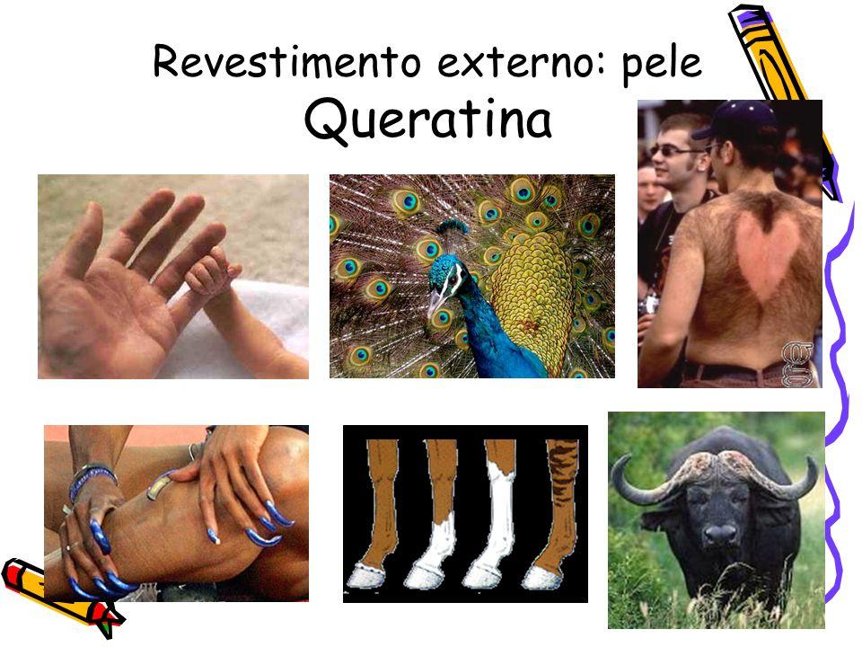 Revestimento externo: pele Queratina