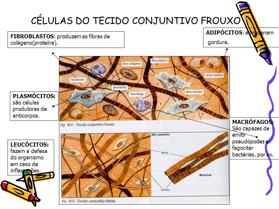 CÉLULAS DO TECIDO CONJUNTIVO FROUXO