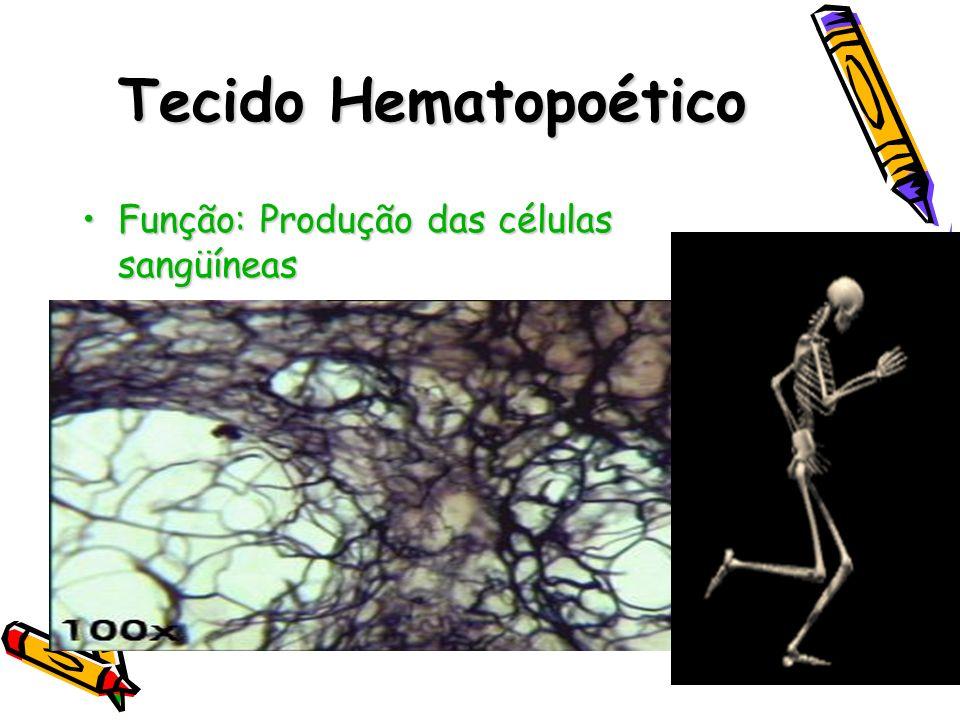 Tecido Hematopoético Função: Produção das células sangüíneas