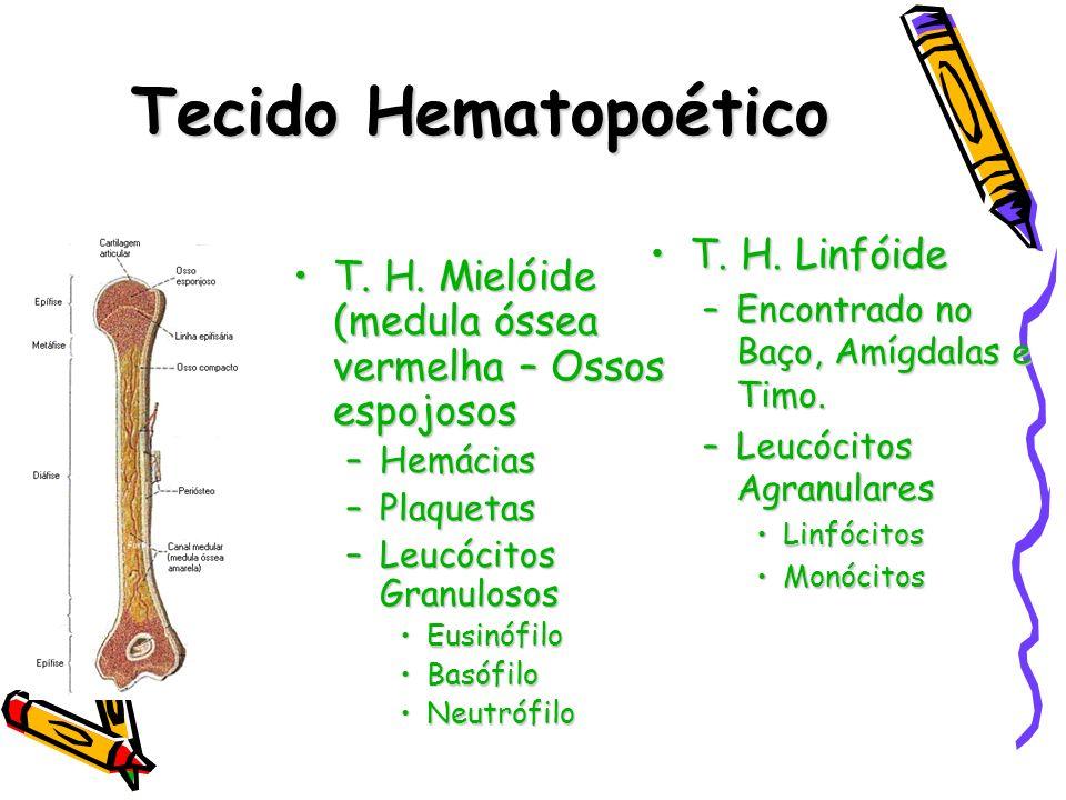 Tecido Hematopoético T. H. Linfóide