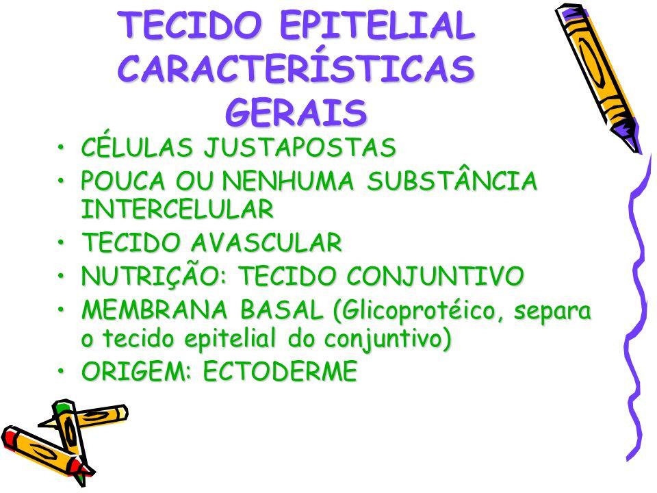 TECIDO EPITELIAL CARACTERÍSTICAS GERAIS