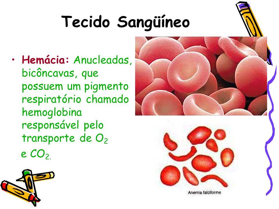 Tecido Sangüíneo Hemácia: Anucleadas, bicôncavas, que possuem um pigmento respiratório chamado hemoglobina responsável pelo transporte de O2.