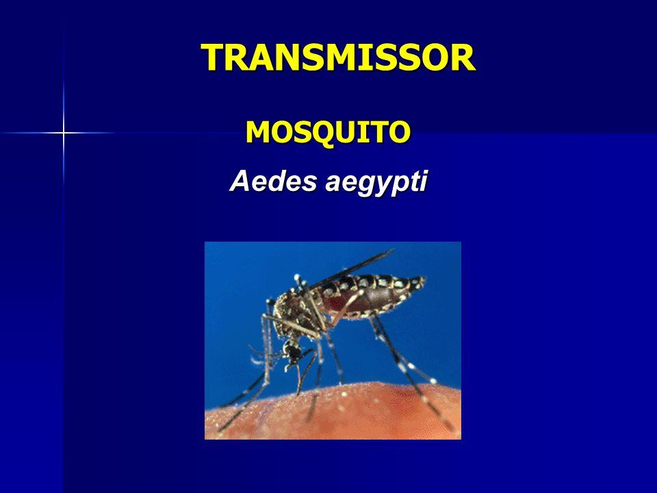 TRANSMISSOR MOSQUITO Aedes aegypti