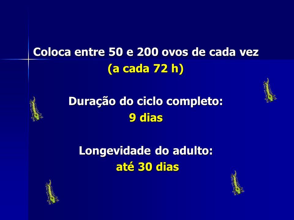 Coloca entre 50 e 200 ovos de cada vez (a cada 72 h)