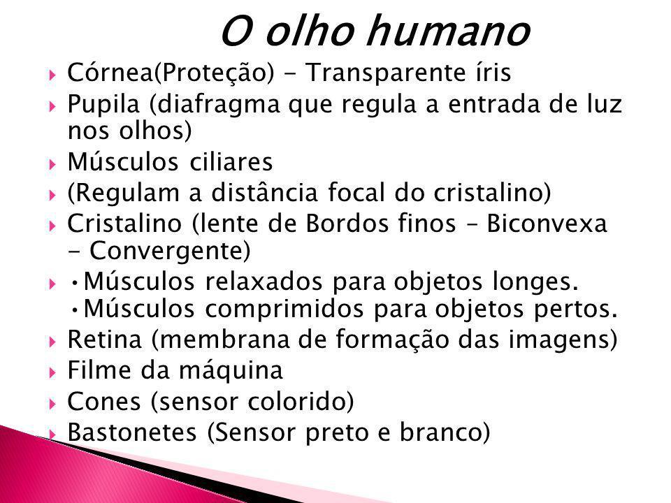 O olho humano Córnea(Proteção) - Transparente íris