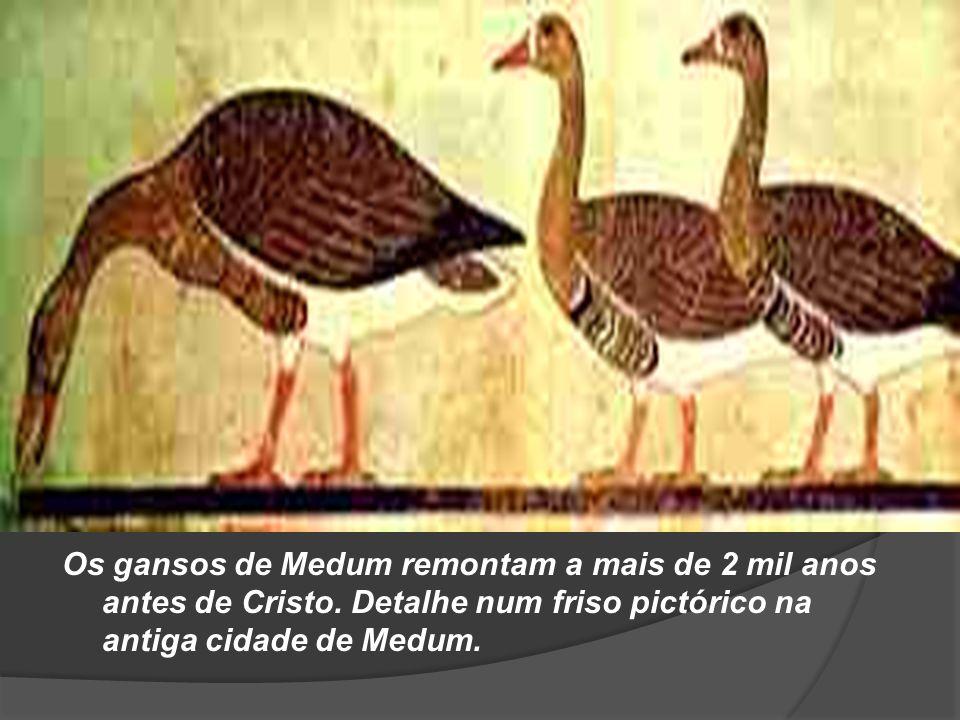 Os gansos de Medum remontam a mais de 2 mil anos antes de Cristo