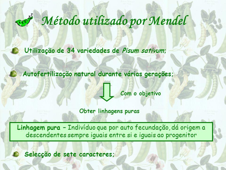 Método utilizado por Mendel