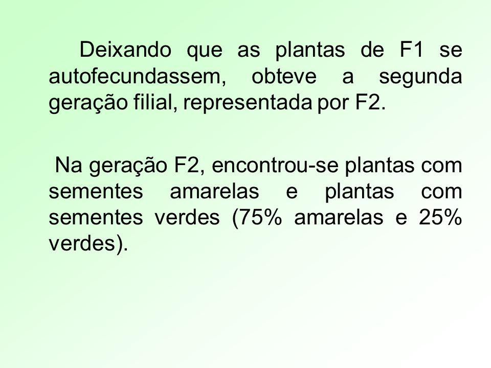 Deixando que as plantas de F1 se autofecundassem, obteve a segunda geração filial, representada por F2.
