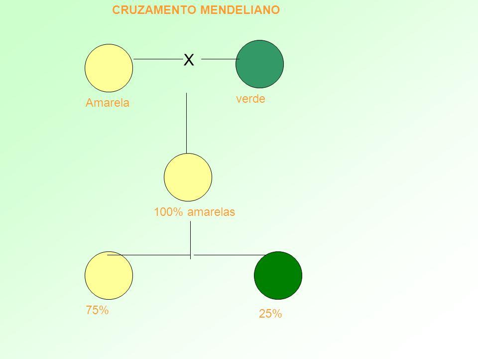 CRUZAMENTO MENDELIANO