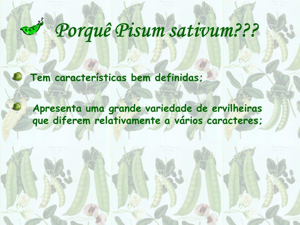 Porquê Pisum sativum Tem características bem definidas;