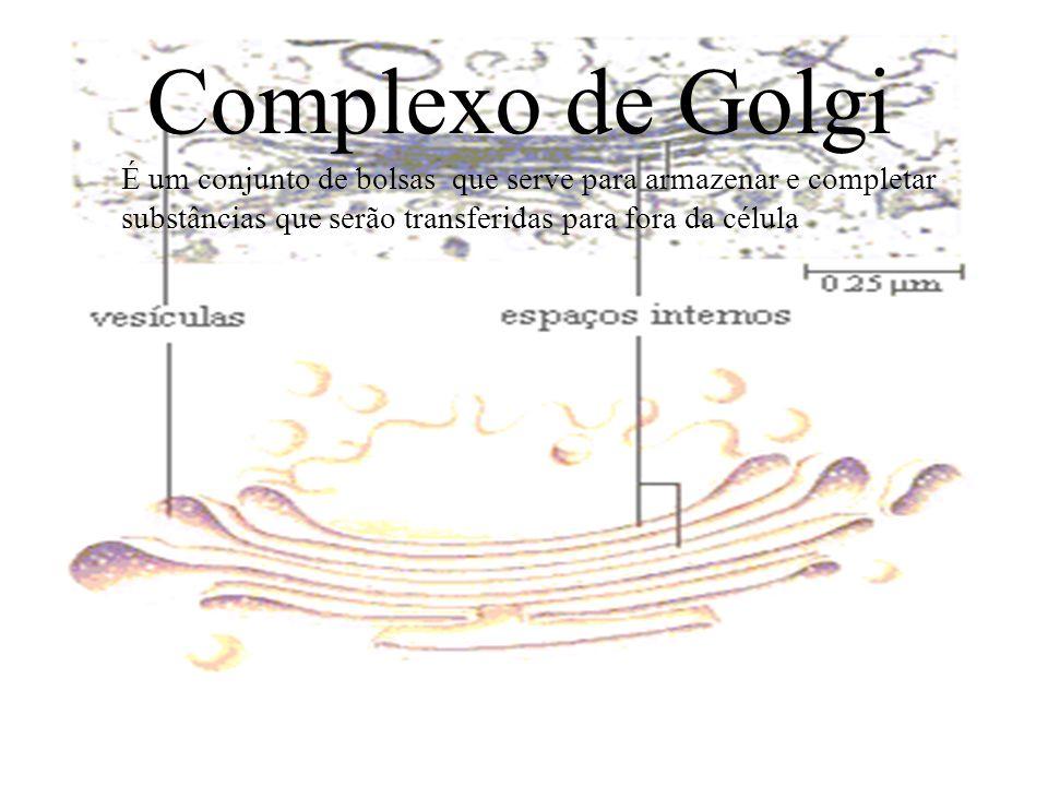 Complexo de Golgi É um conjunto de bolsas que serve para armazenar e completar substâncias que serão transferidas para fora da célula.